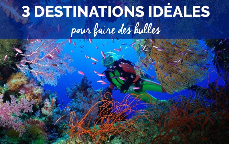 Croisières plongée : Top 3 des destinations